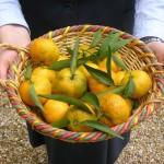 Jesen je čas za obiranje sadov